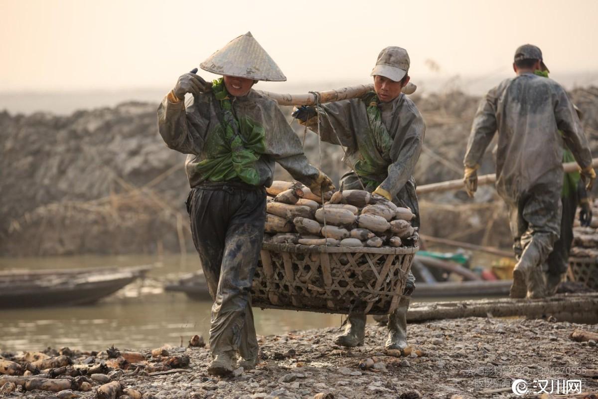 7人挖藕6万余公斤快过年却拿不到工钱,汉川多部门介入,...